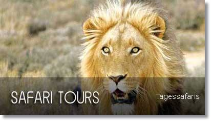Kapstadt Big Five Safaris